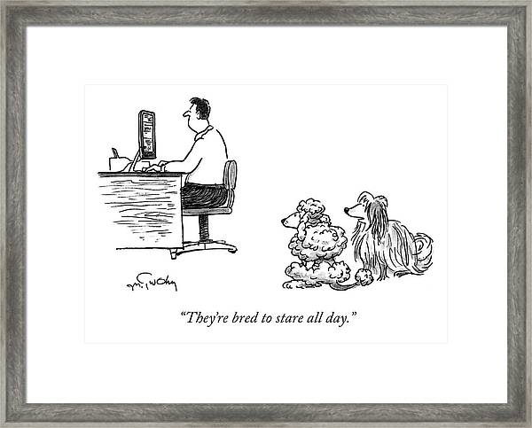 They're Bred To Stare Framed Print