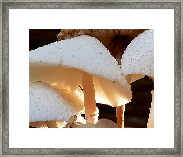 Thirsty Ant Framed Print