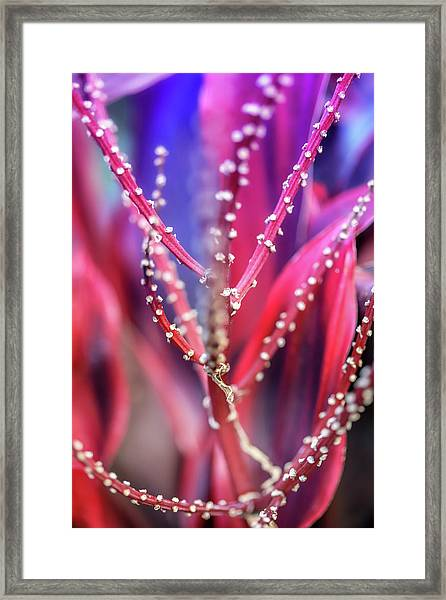 Thorns  Framed Print