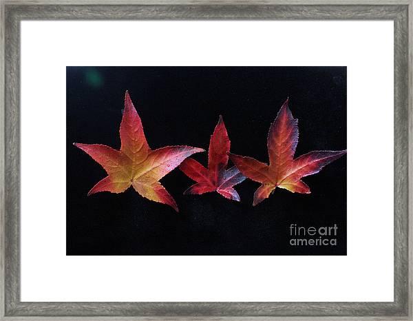 Three Amigos Or Amigas Framed Print