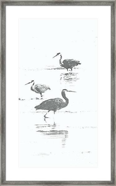 Three Blue Herons Framed Print
