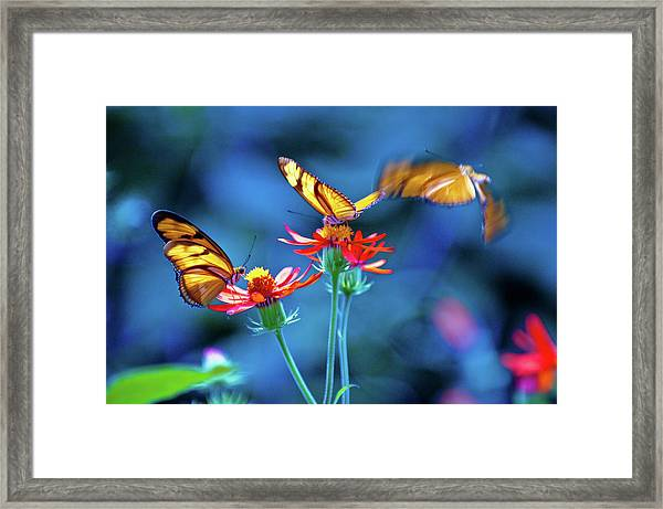 Three Butterflies Framed Print by By Ken Ilio