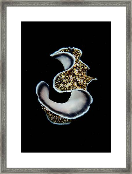 Three Framed Print by Nature, Underwater And Art Photos. Www.narchuk.com
