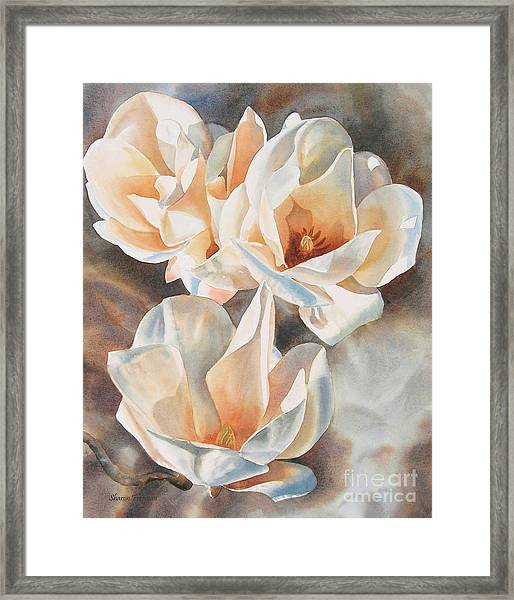 Three White Magnolias Framed Print