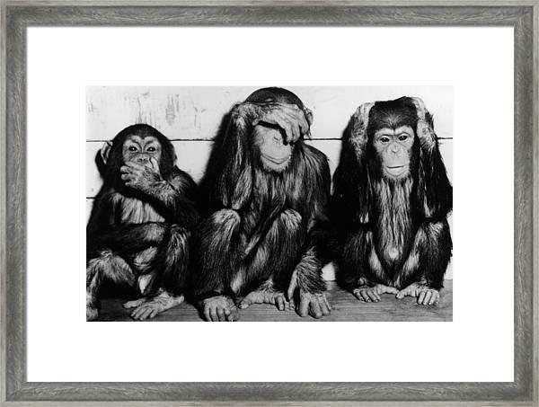 Three Wise Monkeys Framed Print