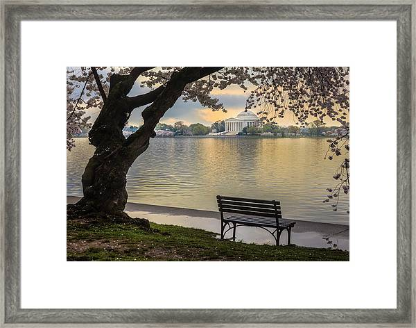 Tidal Basin With Cherry Blossoms And Framed Print by Drnadig