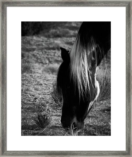 Framed Print featuring the photograph Tierra by Catherine Sobredo