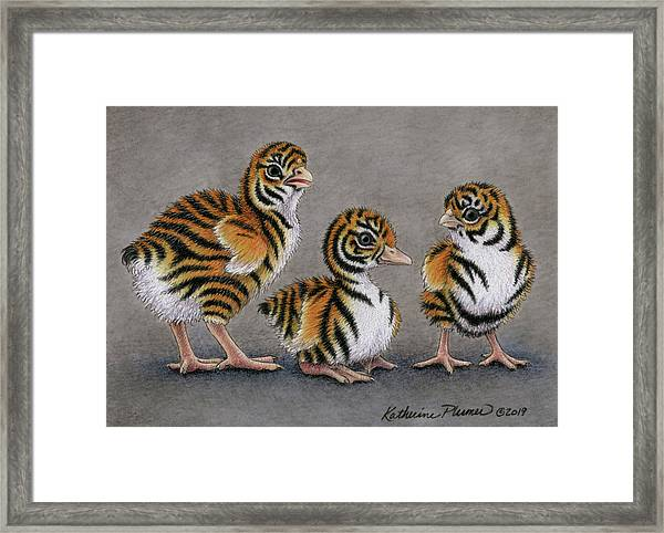 Tiger Chicks Framed Print
