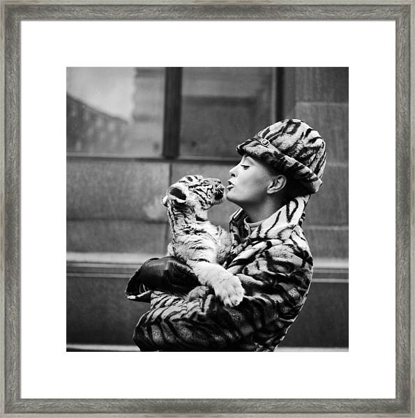 Tiger Lady Framed Print by Central Press