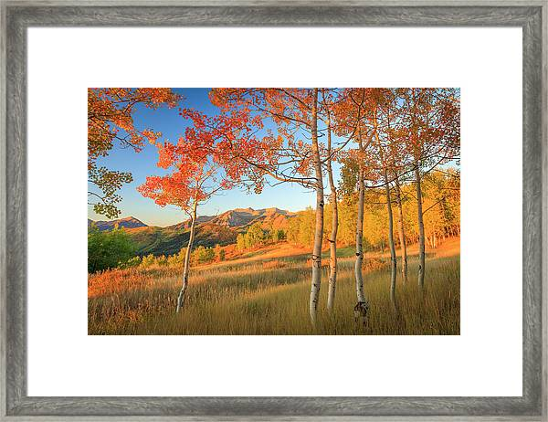 Timp With Fiery Aspens Framed Print
