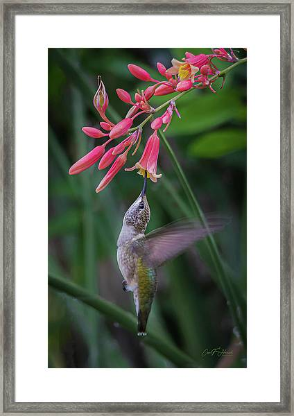 Tiny Acrobat Framed Print