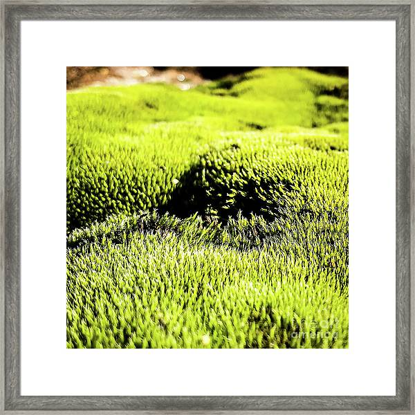 Framed Print featuring the photograph Tiny Forest 2 by Atousa Raissyan