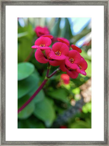 Tiny Red Flowers Framed Print
