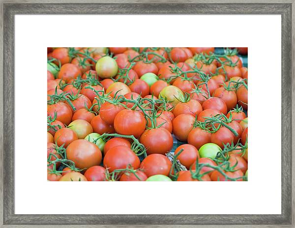 Tomatoes On The Vine Framed Print by By Ken Ilio