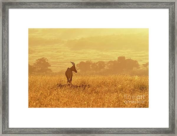Topi In Early Morning Sunlight Framed Print