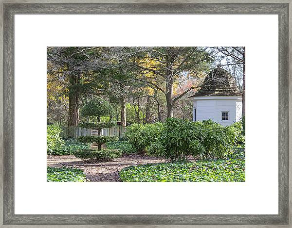 Topiary In Colonial Williamsburg Framed Print