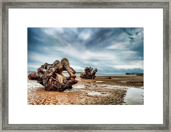 Framed Print featuring the photograph Tossed Up On The Beach by Dee Browning