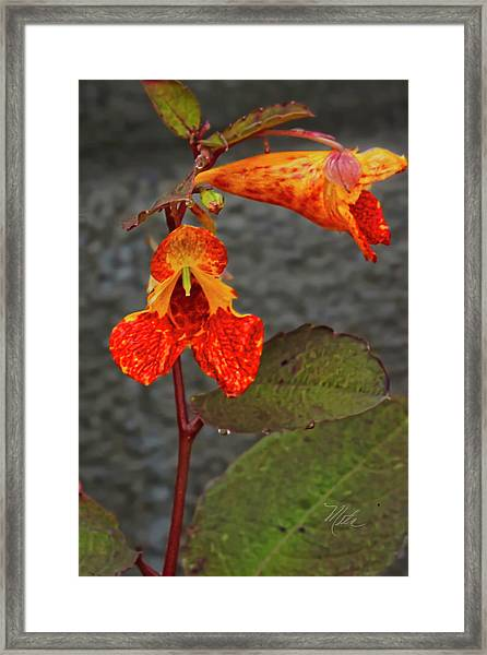 Touch Me Nots Framed Print