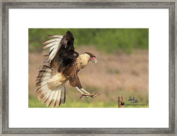 Touching Down Framed Print