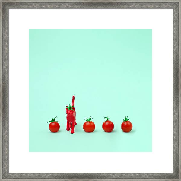 Toy Cat Painted Like A Tomato In Row Framed Print