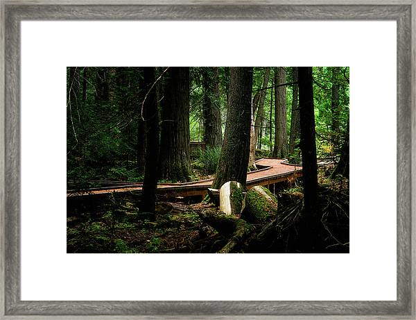 Trail Of The Ceders Framed Print