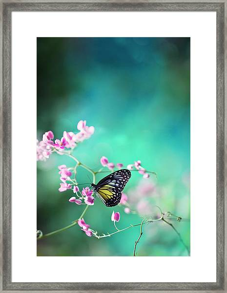 Trails Of Spring Framed Print by Twomeows