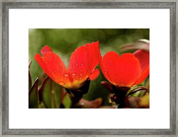 Translucent Framed Print