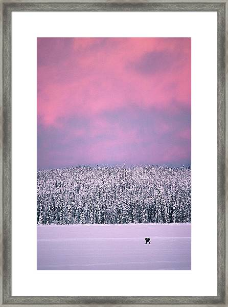 Trapper In Alaska, United States - Framed Print by Jean-erick Pasquier