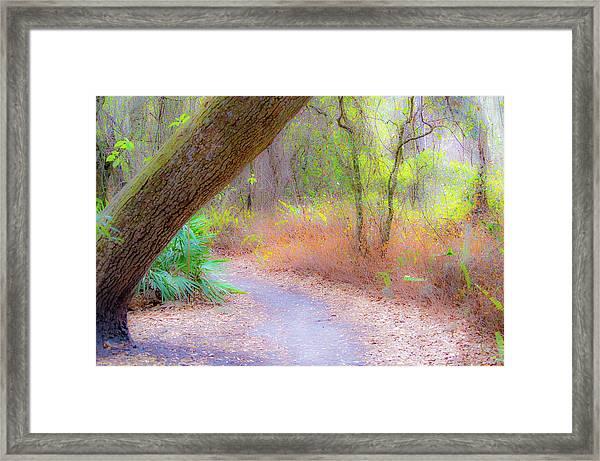 Traveled Paths Framed Print