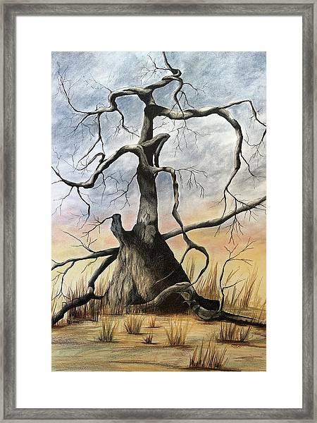 Tree 1 Framed Print