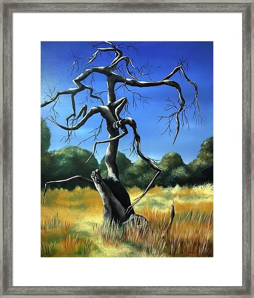Tree 3 Framed Print