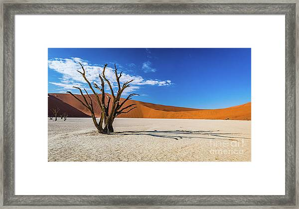 Tree And Shadow In Deadvlei, Namibia Framed Print