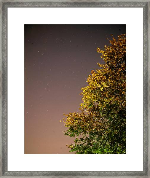 Tree And Stars Framed Print