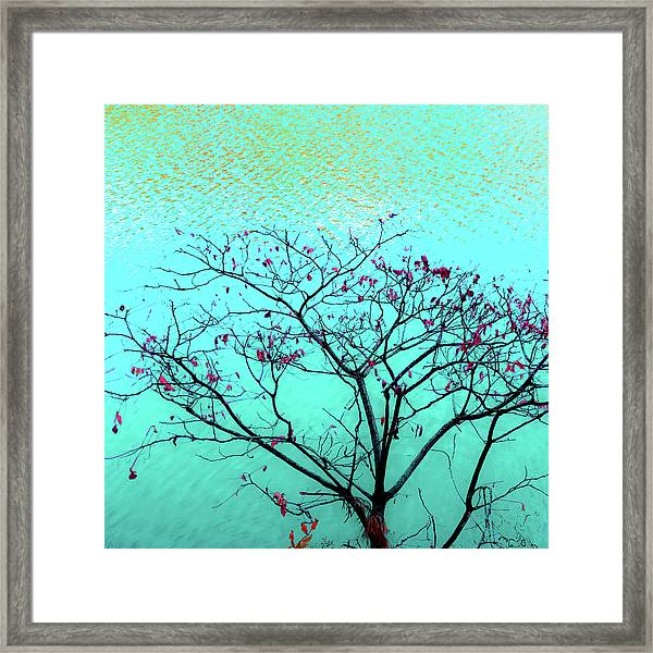 Tree And Water 1 Framed Print