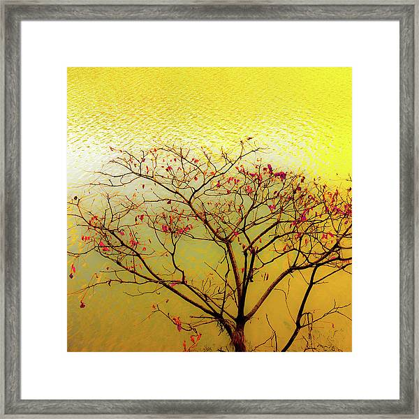 Tree And Water 2 Framed Print