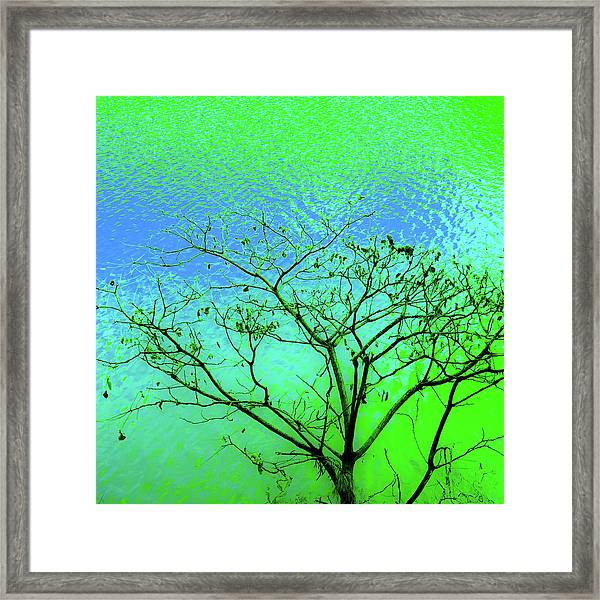 Tree And Water 3 Framed Print