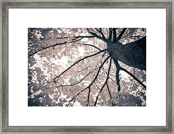 Tree Branches Framed Print