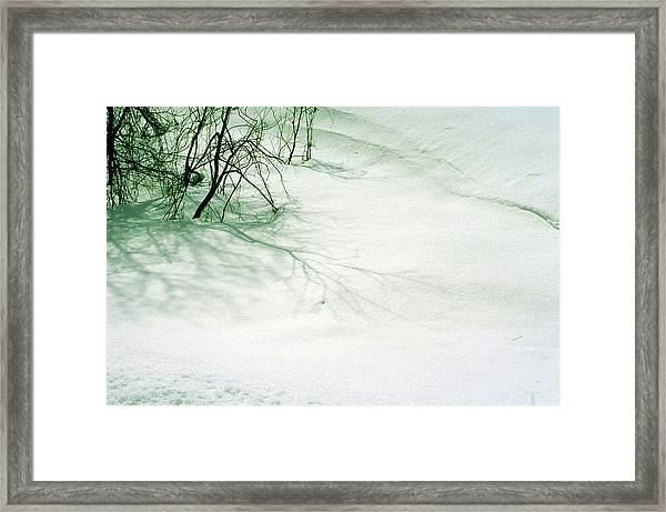Tree Buried Under Snow Framed Print