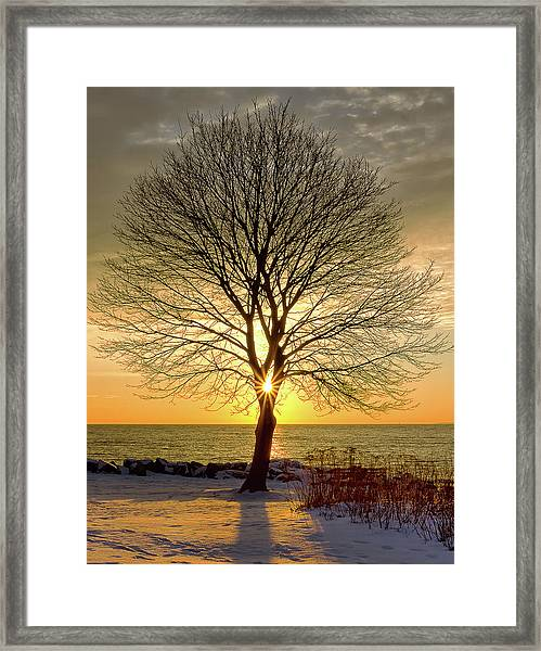 Tree Framed Sunrise New Hampshire Framed Print