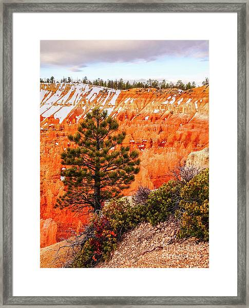 Tree In Bryce Canyon Framed Print by Bob Lentz
