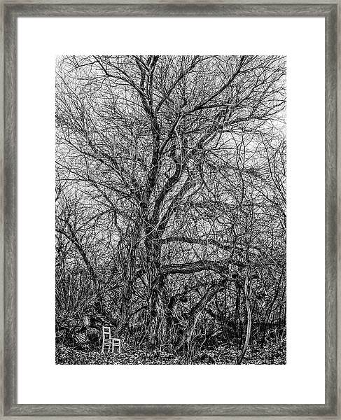 Mother Tree / The Chair Project Framed Print