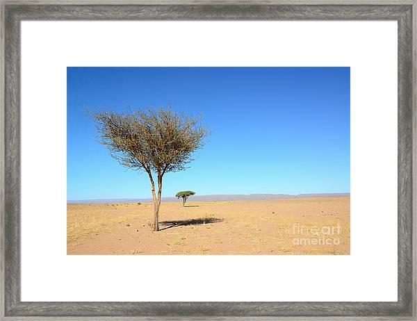 Tree In Sahara Desert In Morocco Near Framed Print