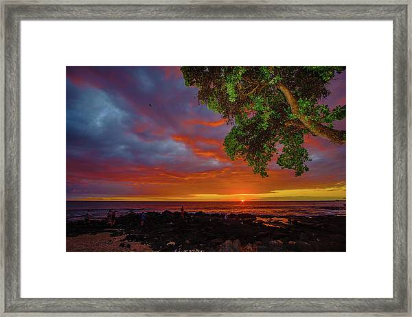 Tree  Sea And Sun Framed Print