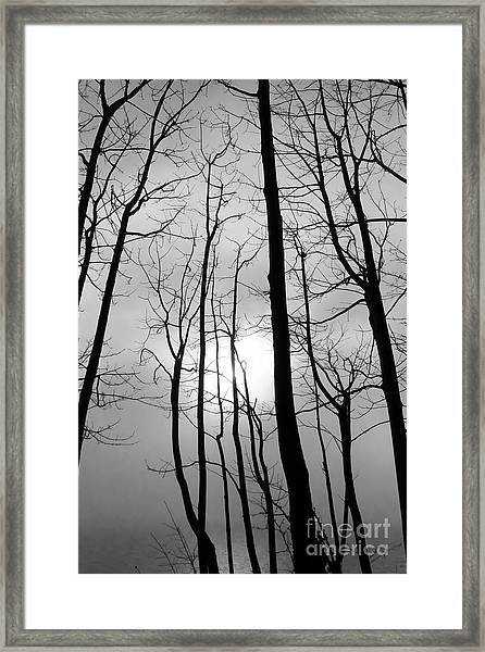 Framed Print featuring the photograph Tree Series 1 by Jeni Gray