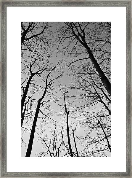 Framed Print featuring the photograph Tree Series 2 by Jeni Gray