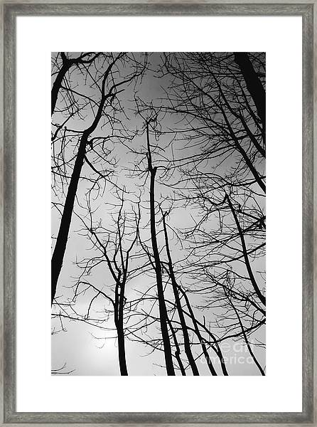 Framed Print featuring the photograph Tree Series 3 by Jeni Gray