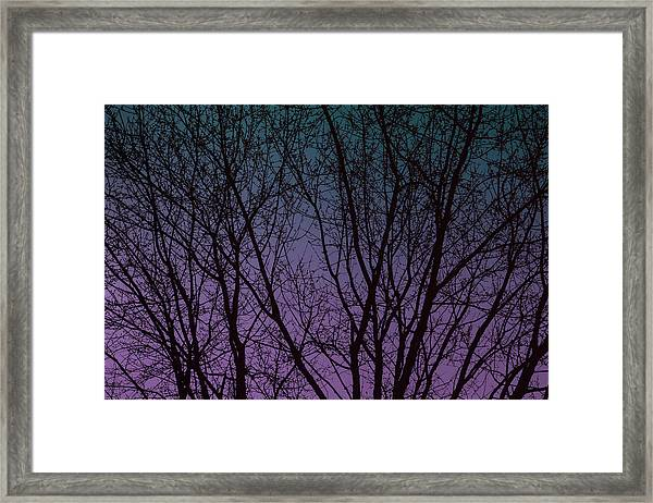 Tree Silhouette Against Blue And Purple Framed Print