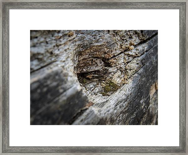Tree Wood Framed Print