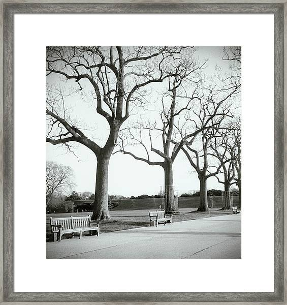 Trees And Benches In Park Framed Print