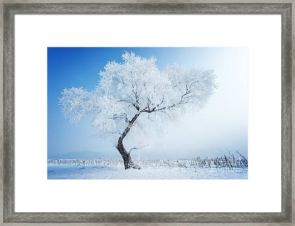 Trees In Frost And Landscape In Snow Framed Print